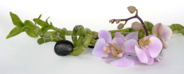 orchid-2115260_1920